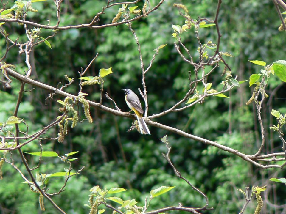 在树枝上美丽的鸟儿