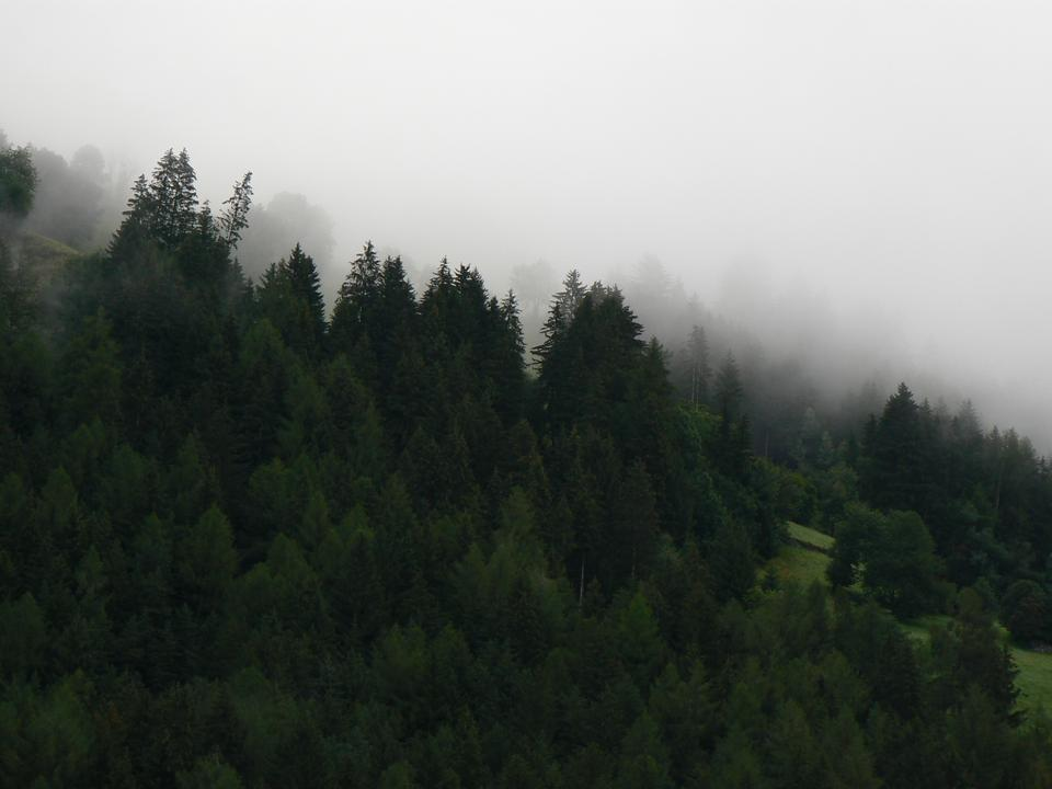 Forested mountain slope in low lying cloud with the evergreen