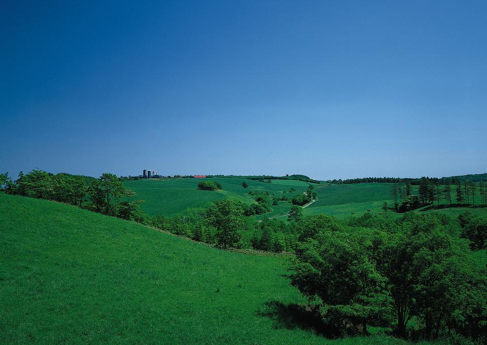 Green hills with young wheat in evening light, agricultural land
