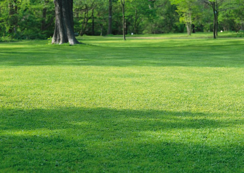 橡樹在農業領域不斷增長的