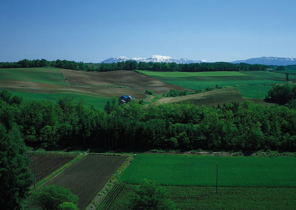 農地の空撮