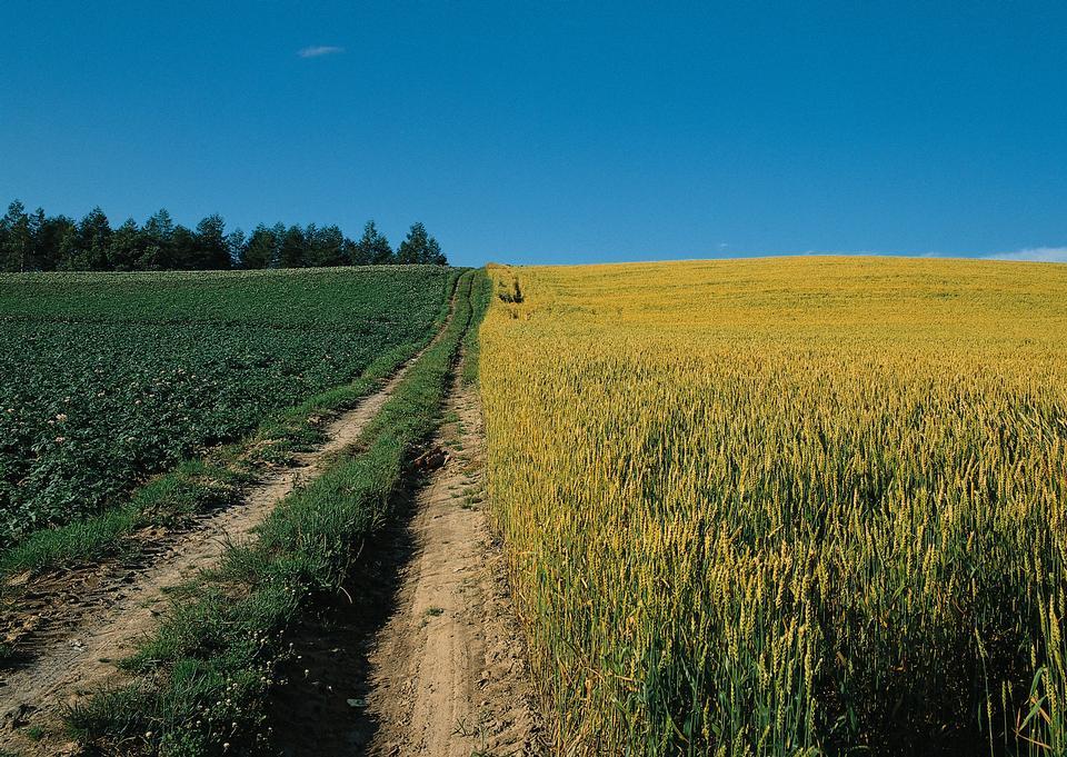 谷物麦田农场的土路