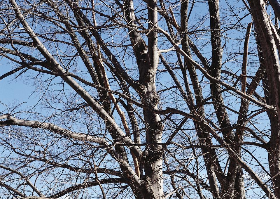 在蓝天的映衬光秃秃的树枝