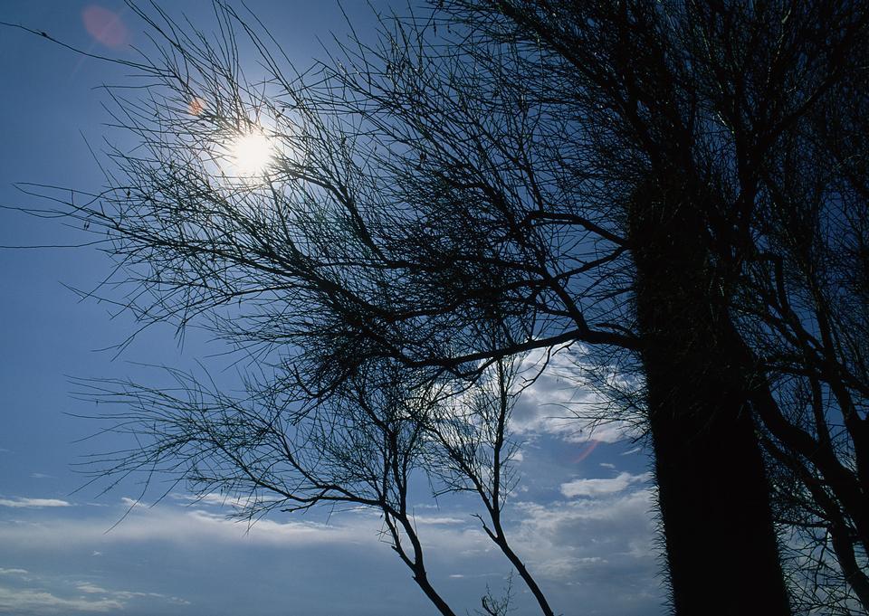 kahlen Baum Zweige gegen den blauen Himmel und Sonne