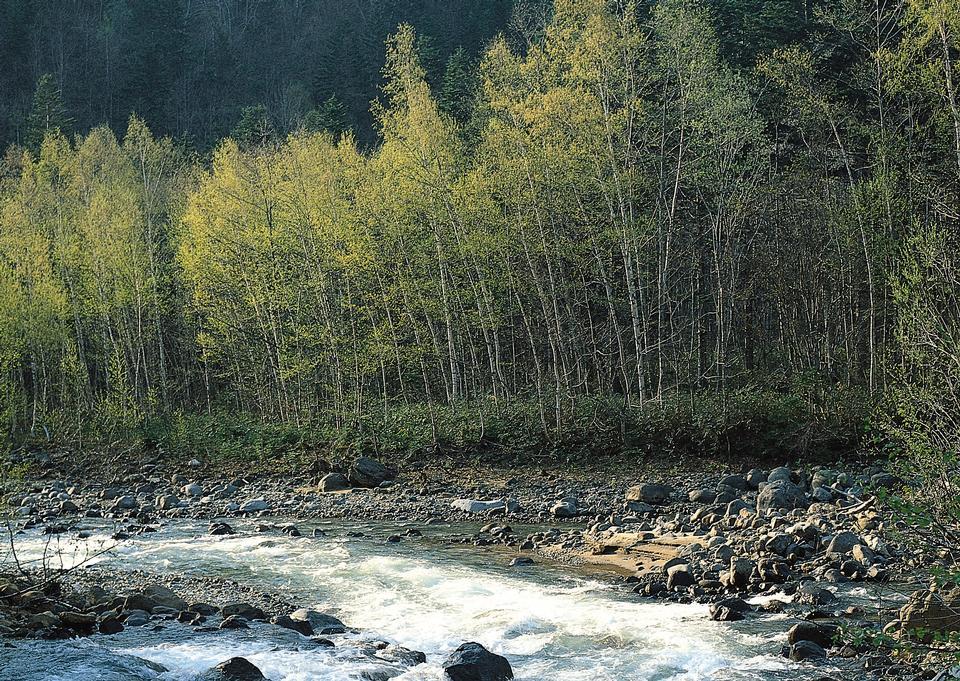 山区河流在夏季。