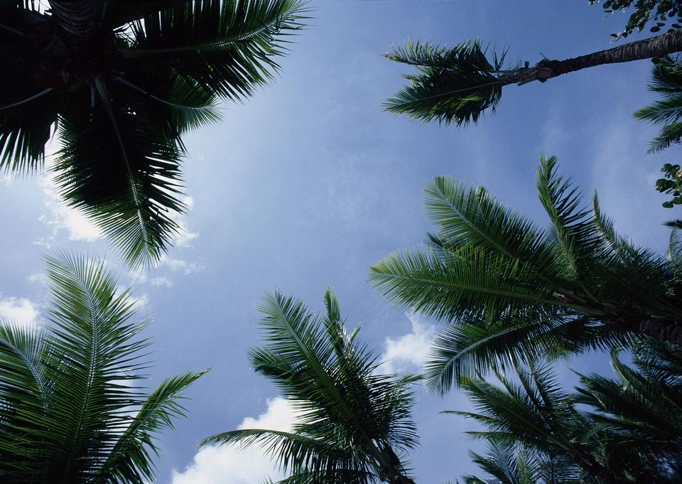 熱帶棕櫚樹的天空背景,