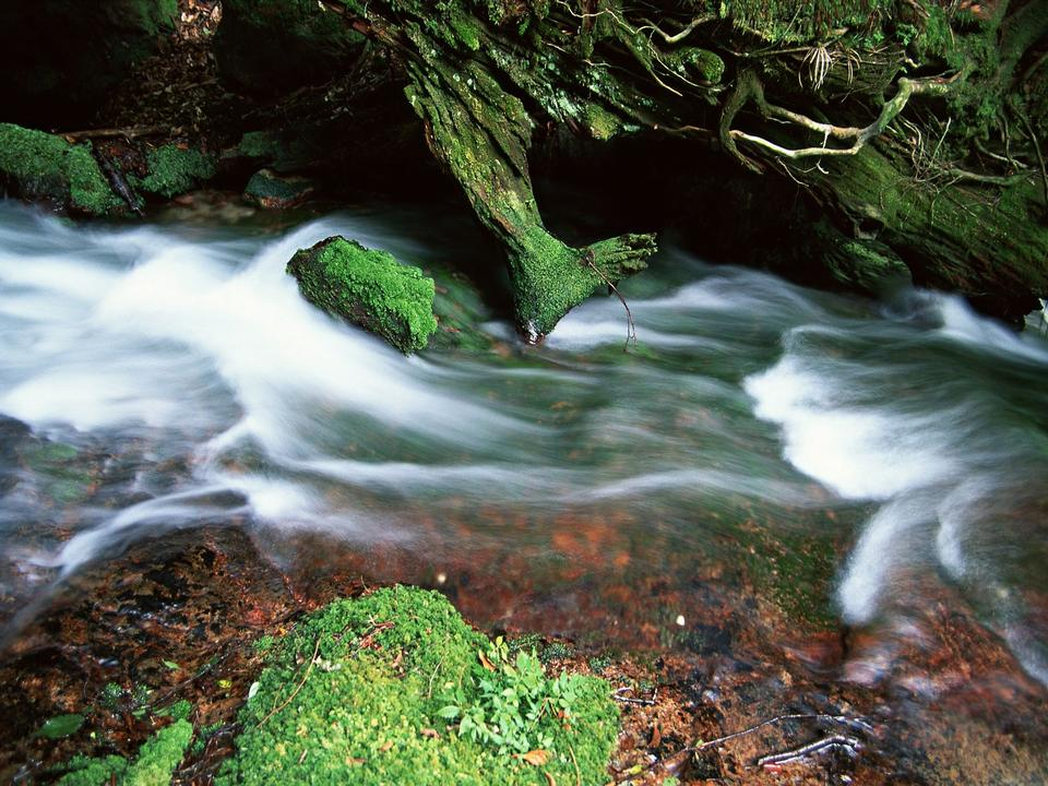 Mountain River in the wood and leave