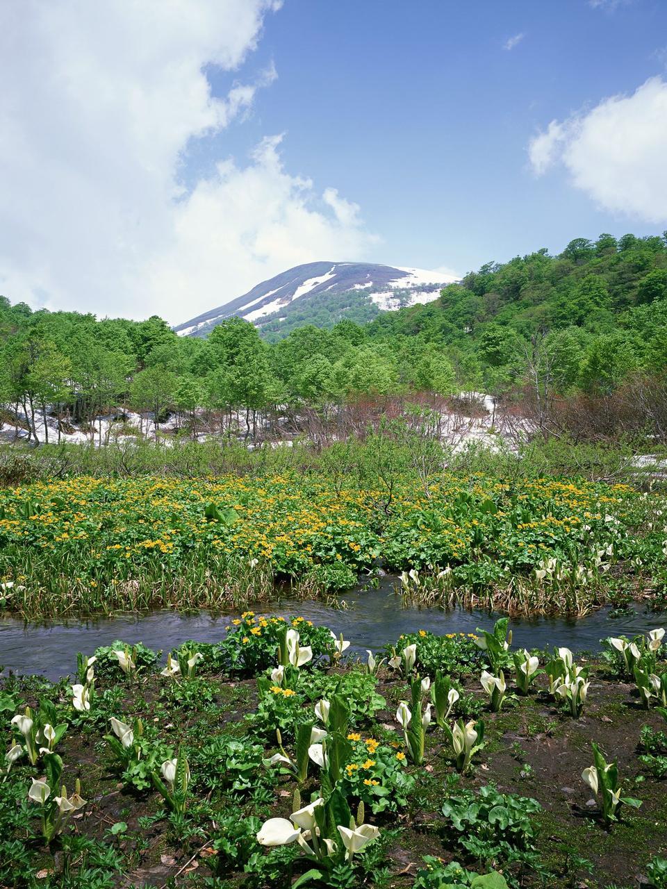 夏季景观河和高山积雪。