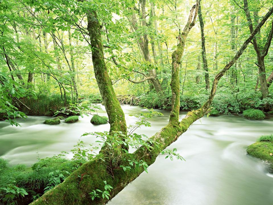 下树山溪水运行