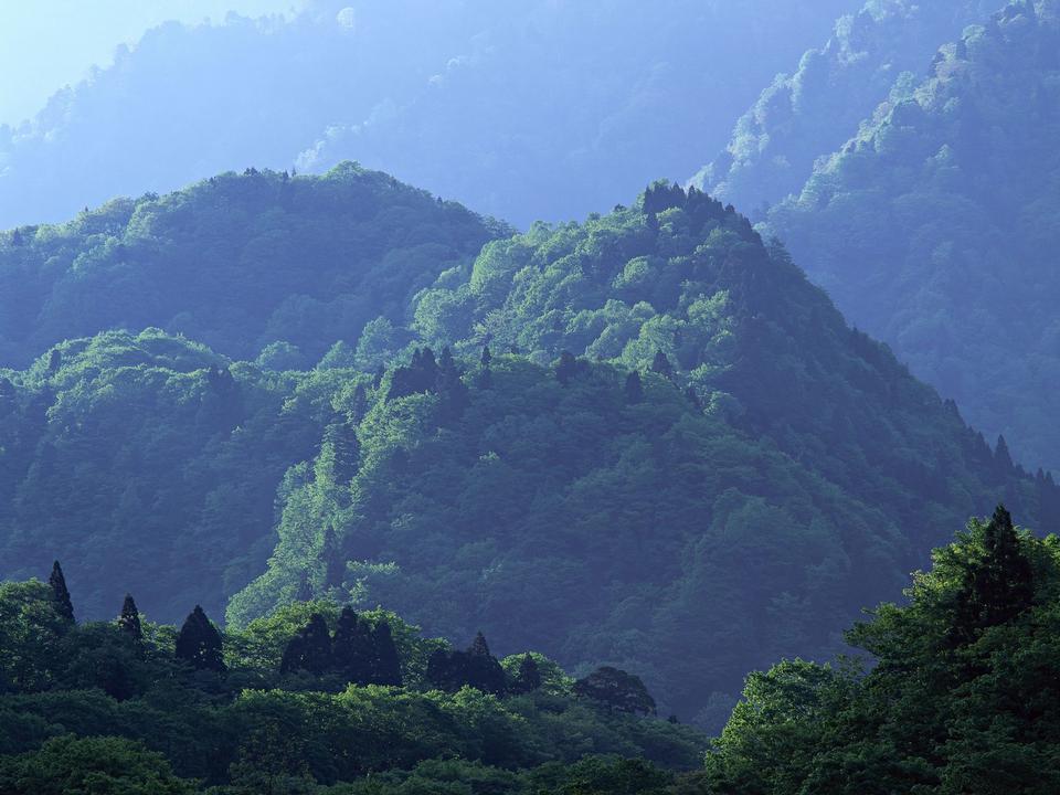 山の中で美しい夏の風景。