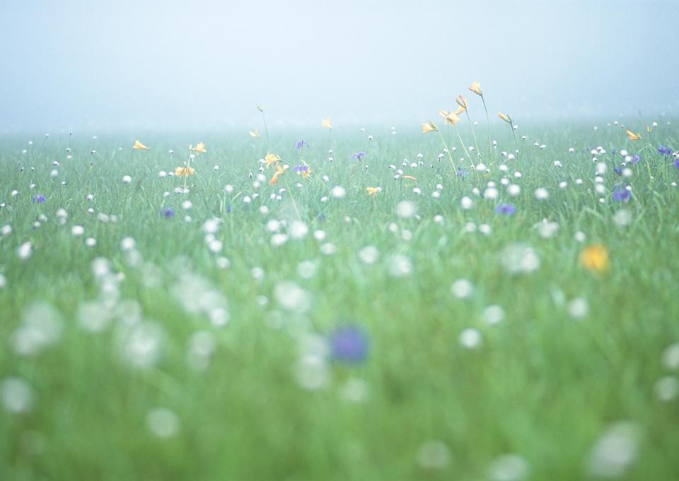大草原のワイルド白い花