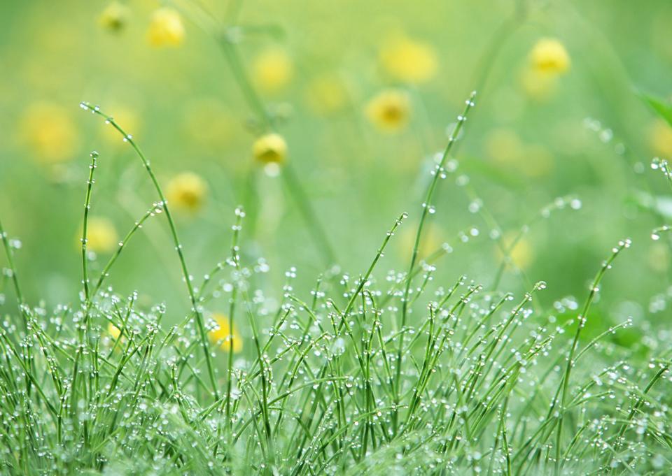 un peu d'eau tombe dans l'herbe - se concentrer sur les gouttes d'eau