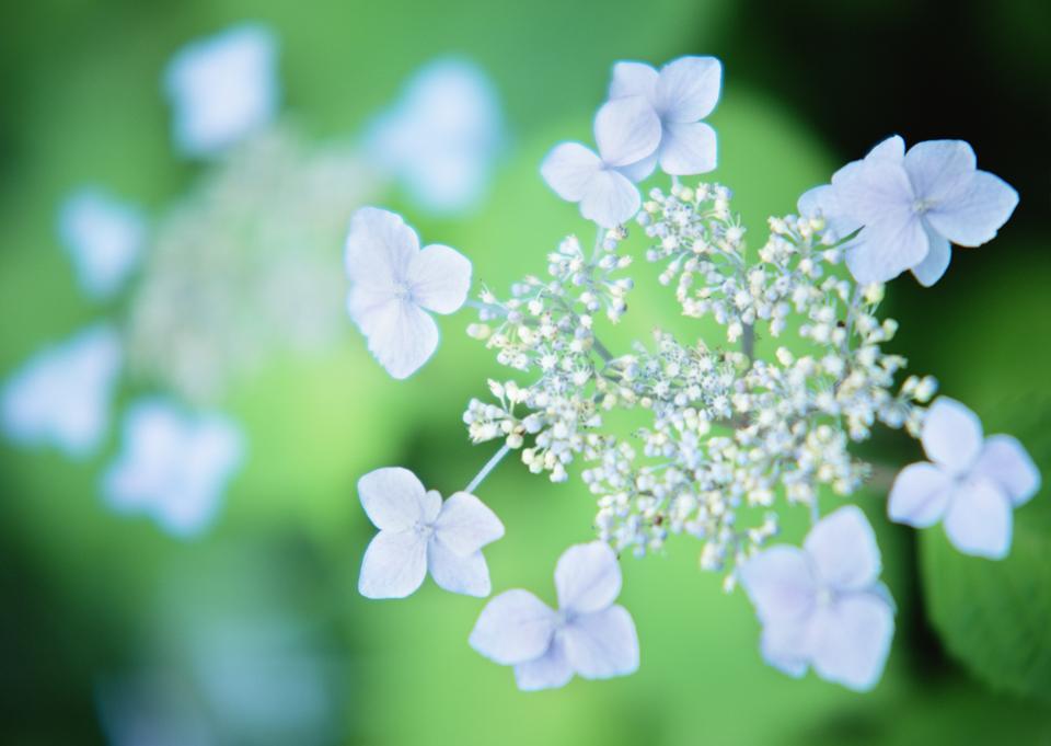 丁香花收起來柔和的色彩