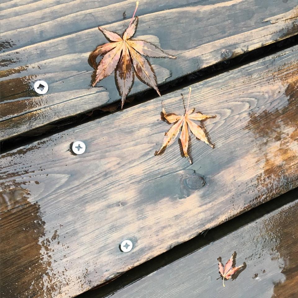 Autumn leaves on wooden wet floor