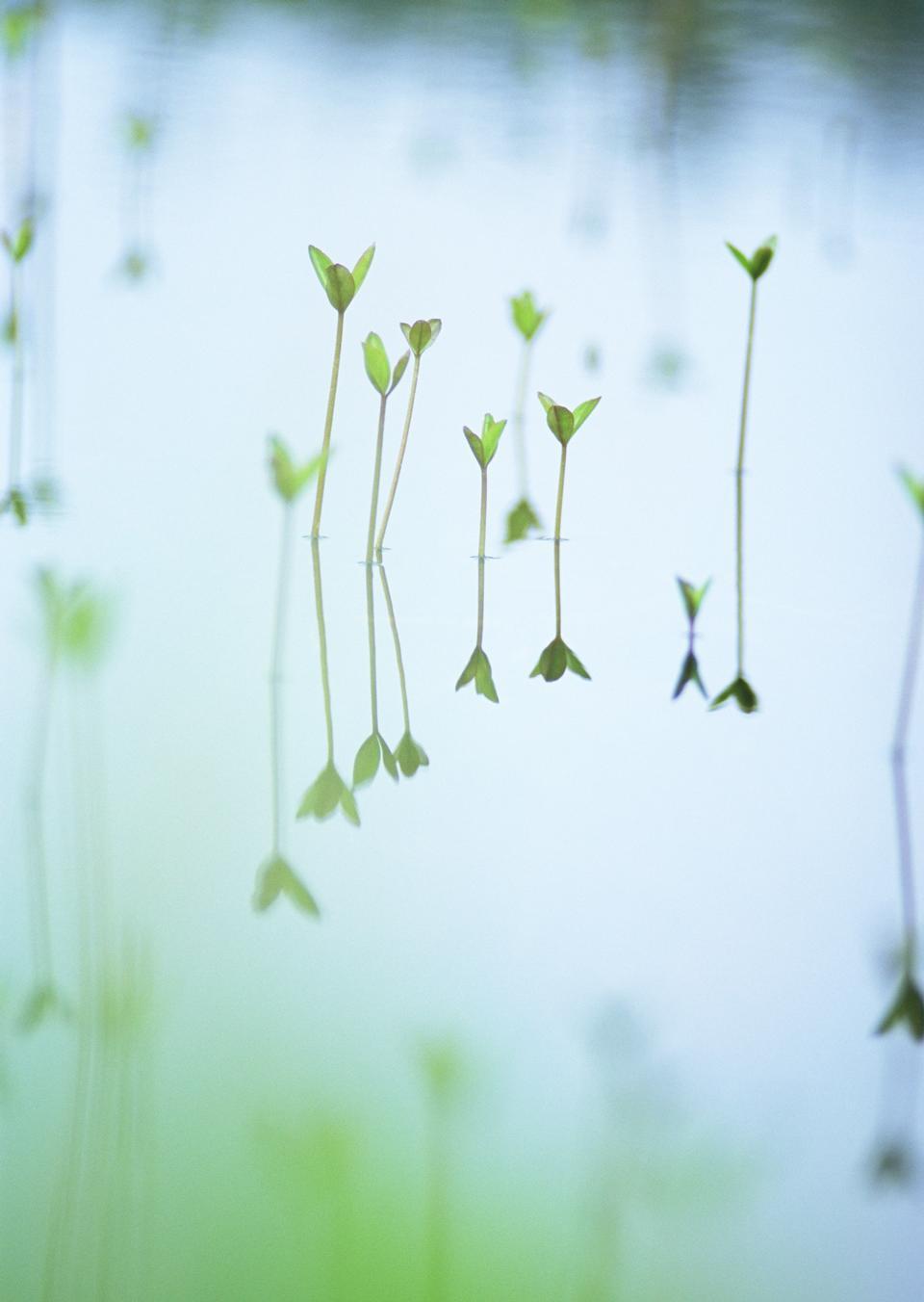 Plantas verdes em uma fileira de tubos de ensaio com água