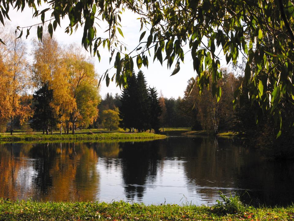 bosque y el río