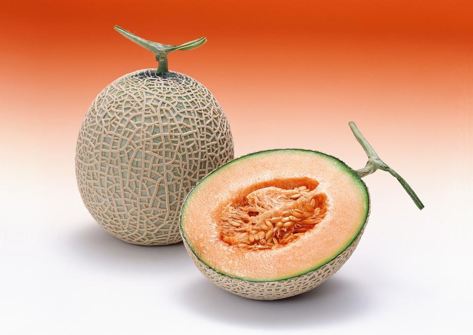 Fresh galia melon slice