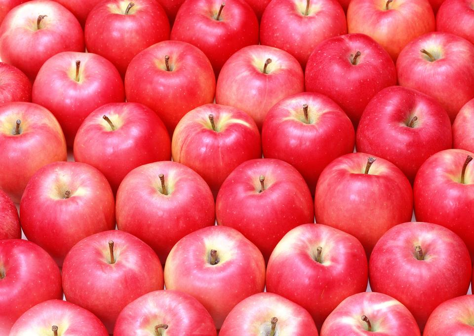 Apples in rows