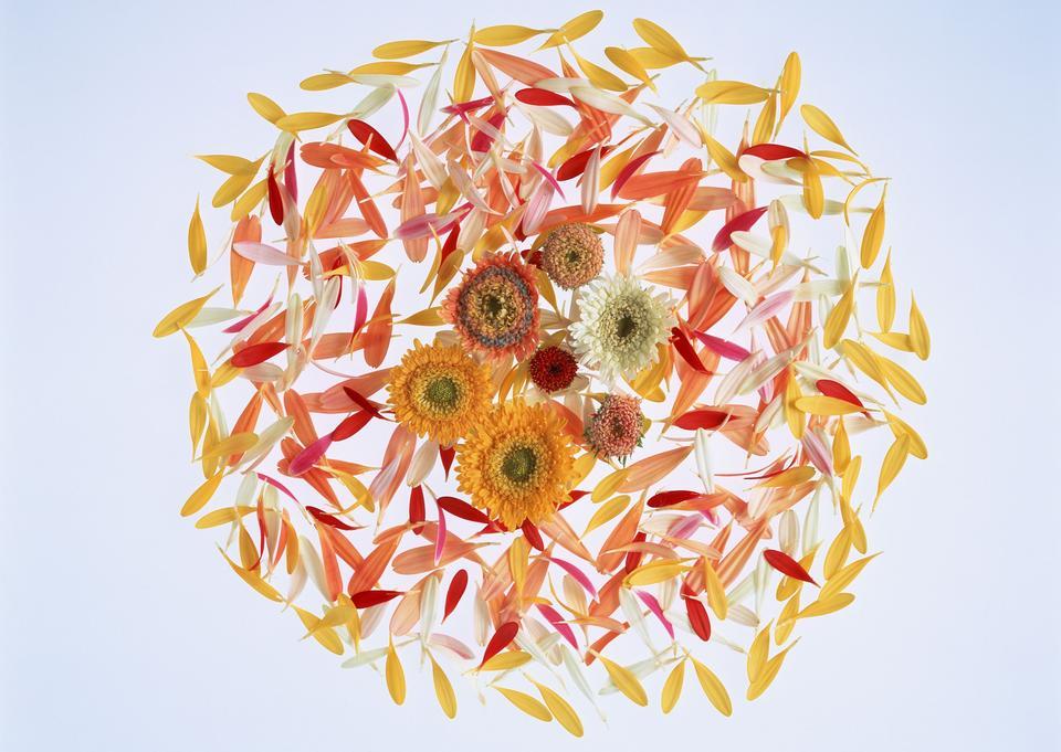 Bouquet of flower watercolor