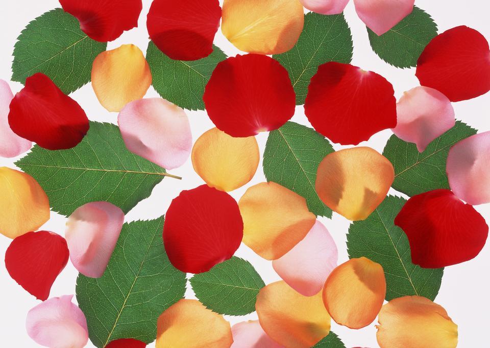 葉や花のpatals