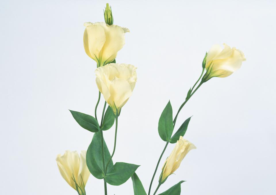 Natural tint yellow flower