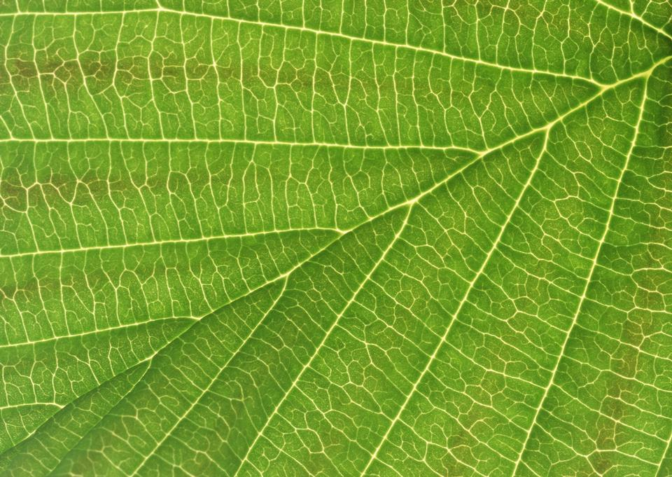 Beautiful green leaf in nature. macro