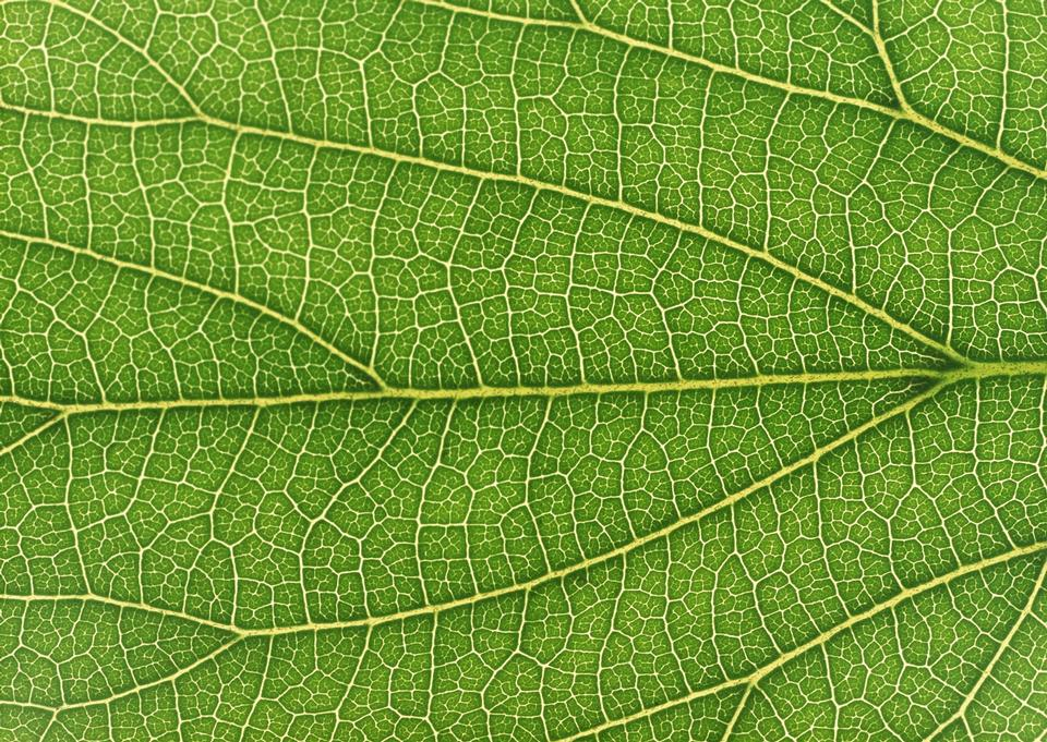 Fresh green leaf texture macro close-up