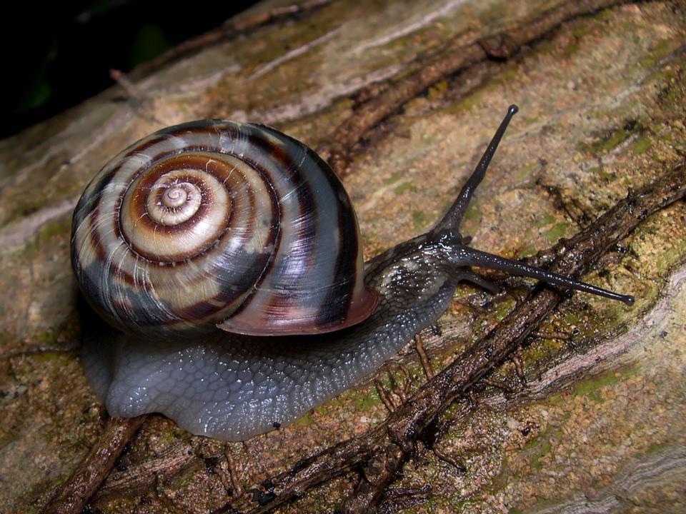 蜗牛放在桌子上