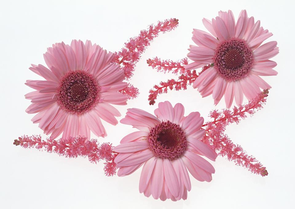 Drei rosa Blumen
