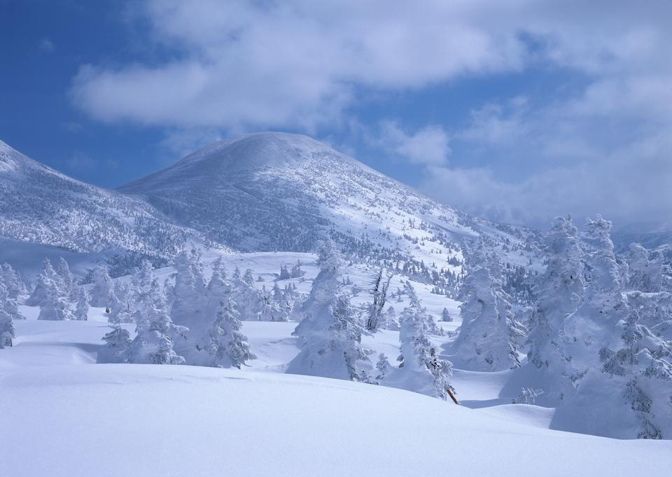 美丽的冬季景观雪覆盖的树木