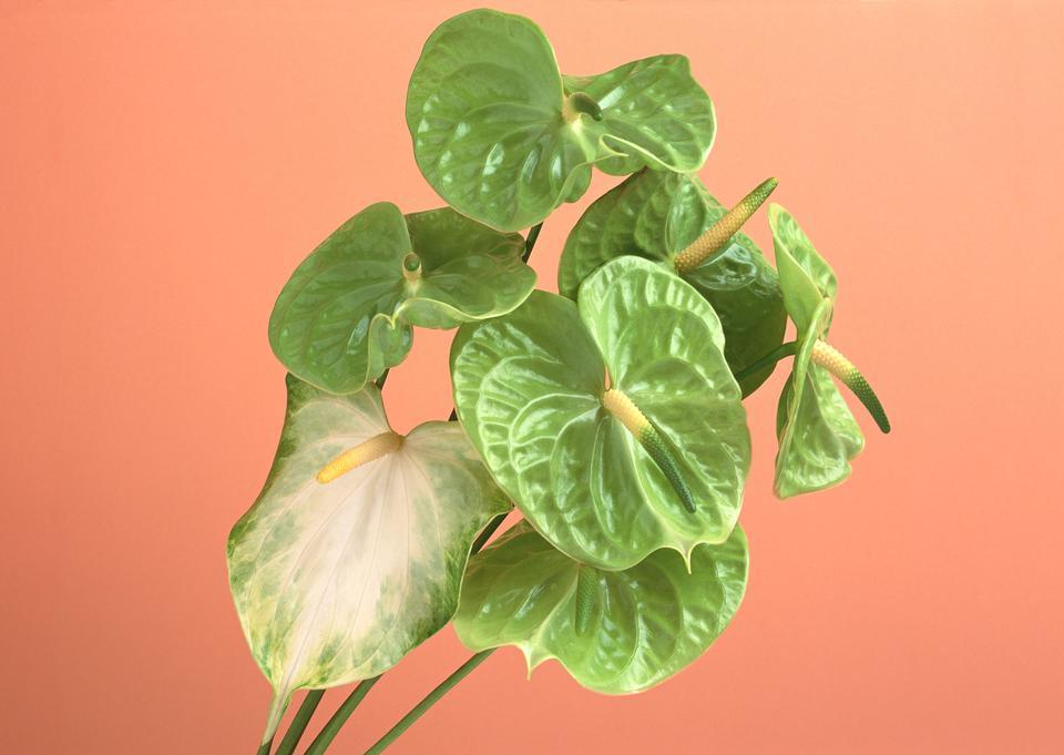 녹색 육수 꽃 타이어 꽃다발.
