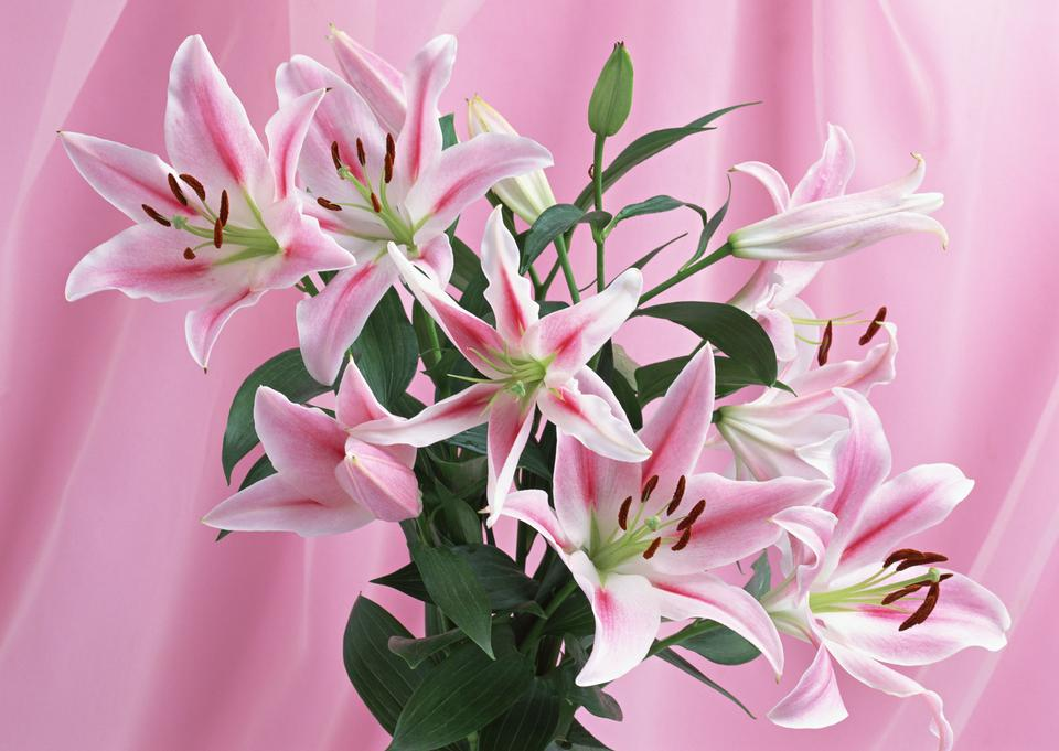 Big, beautiful, fresh bouquet of lilies with long green leaves.