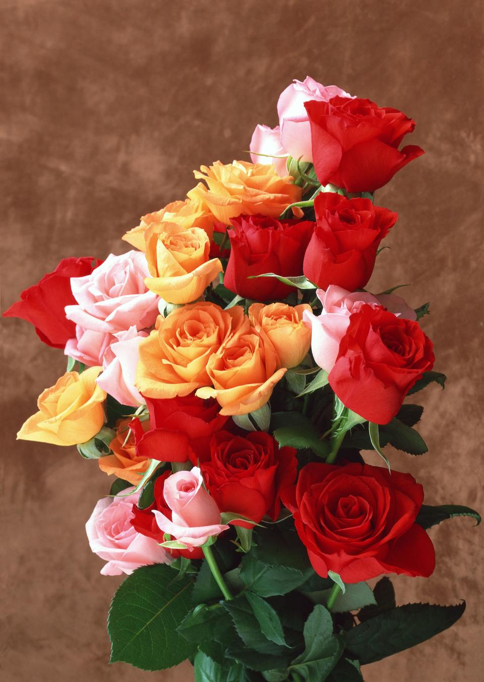 Romantic bouquet of three brightly colored roses in orange, pink