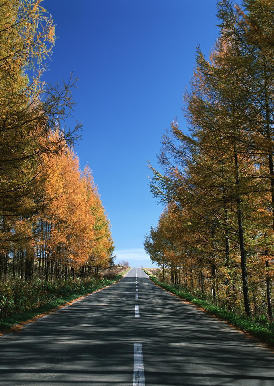 美丽乡村道路