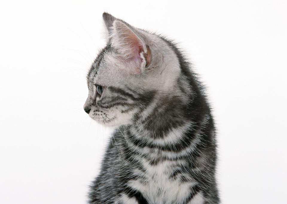 funny black cat kitten