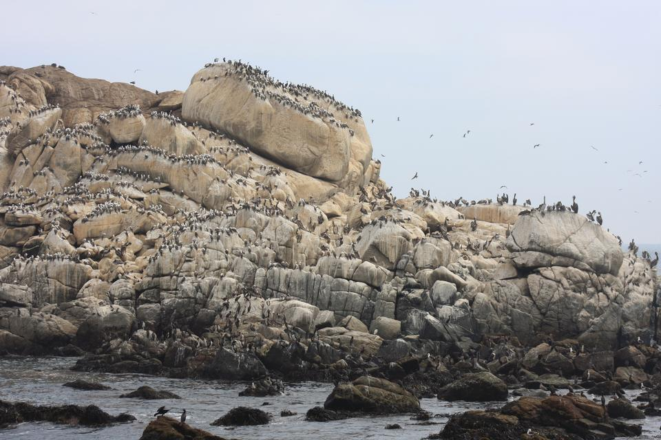 sea lions rookery and birds on the beach in Valparaiso