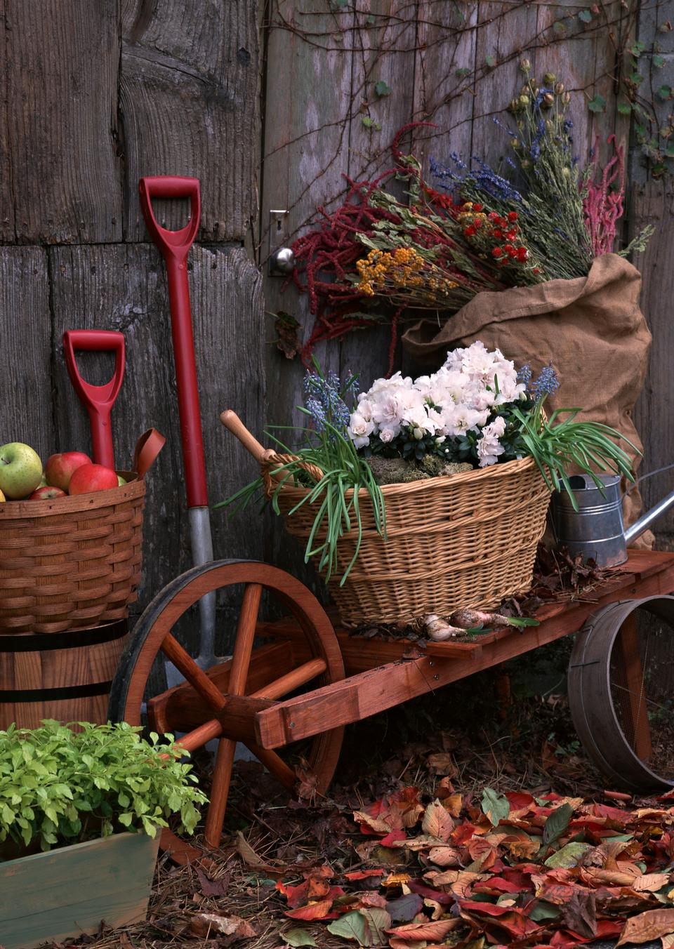 gardening tools outside the potting shed