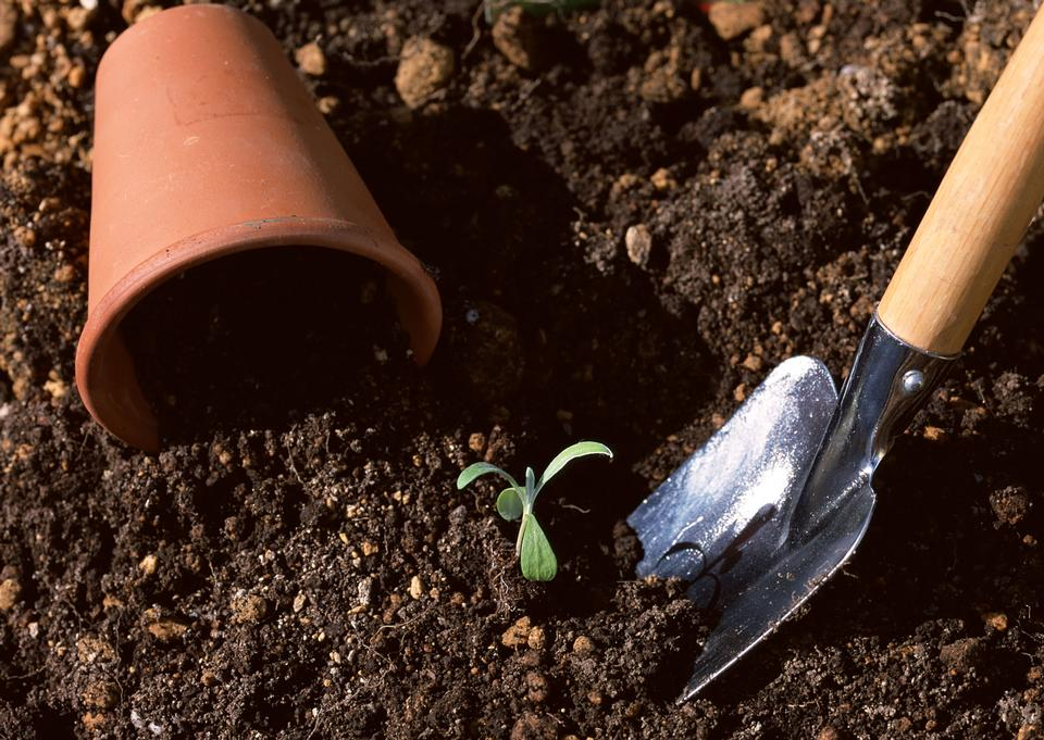 Seedling of young plant and soil