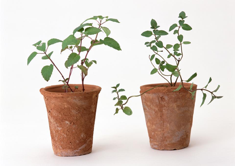 pianta in vaso di fiori