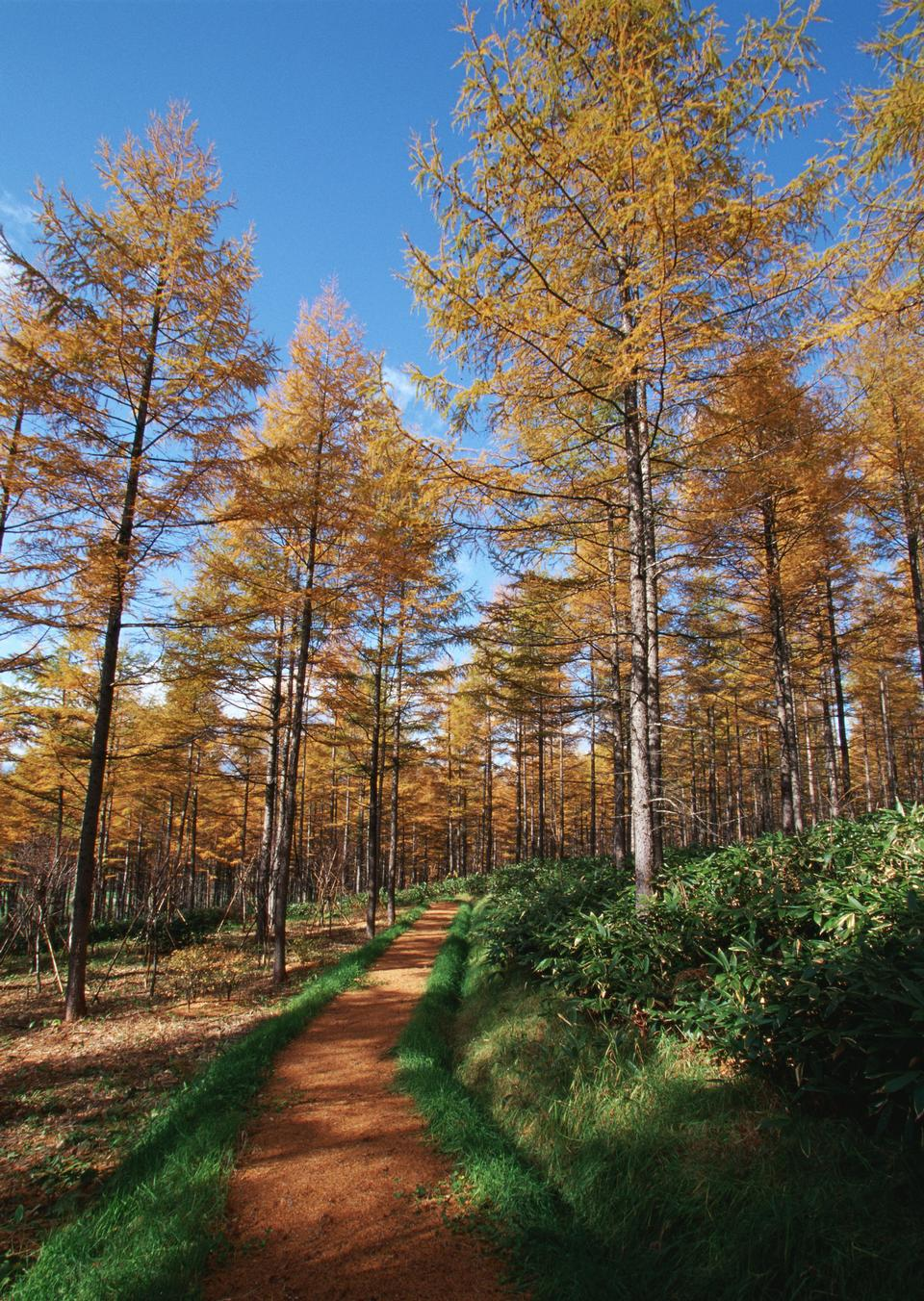 autumn beech landscape