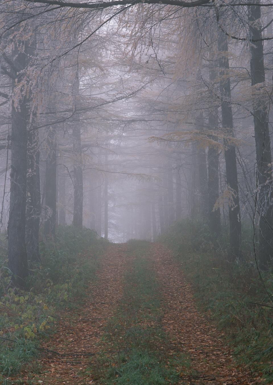 Misty and foggy road in autumn beech landscape