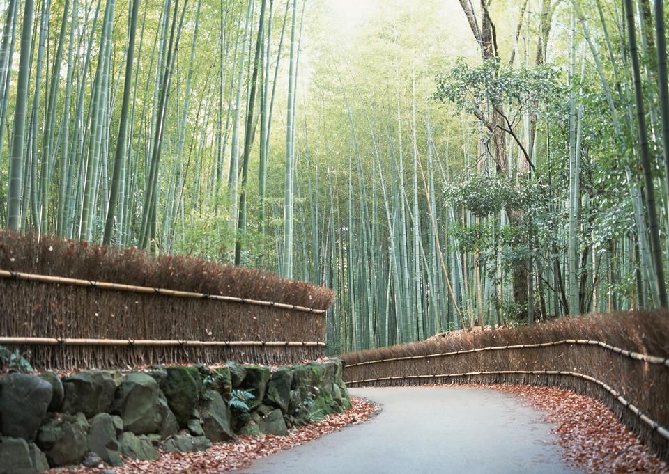 bambouseraie à Arashiyama, Kyoto
