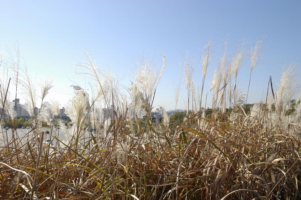 在一个夏天的草甸野花