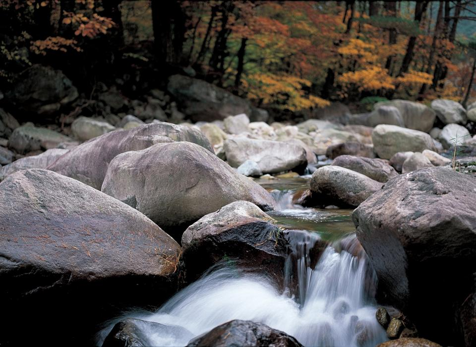 fall forest stream