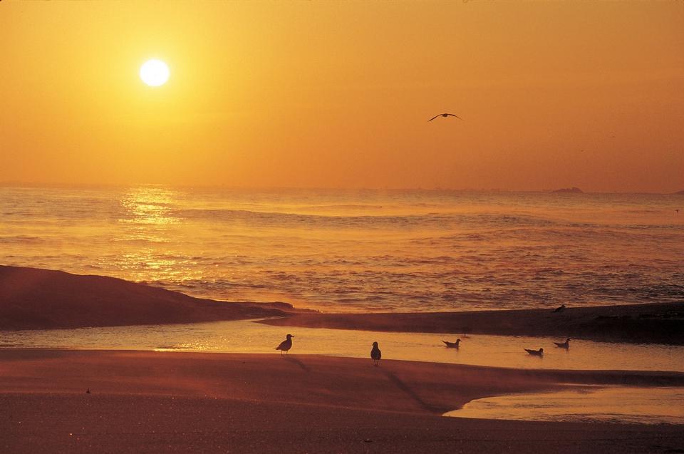 鳥のシルエットを持つビーチ銀行のカラフルな夕日