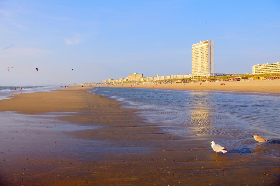 北海沙灘贊德沃特荷蘭北