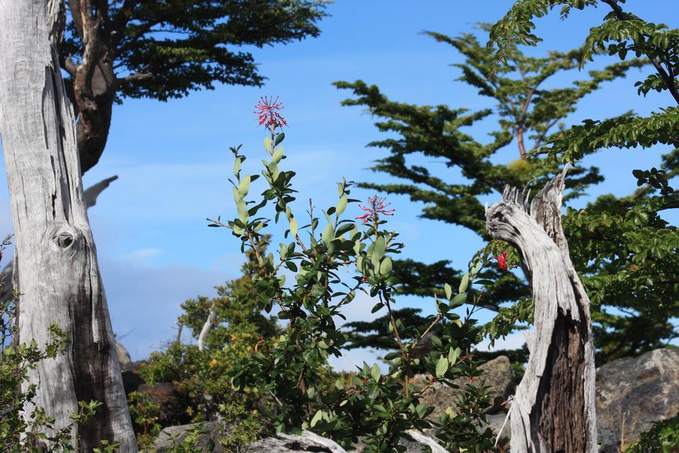 木、フランスバレー、トーレス·デル·パイネ国立公園
