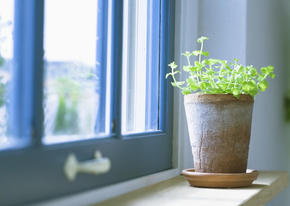 室內花卉的windowsill.vase,鍋。窗簾,薄紗