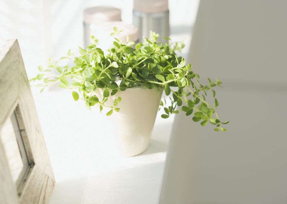 我窗前放室内植物