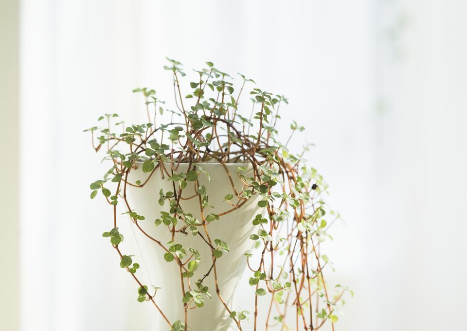 Indoor plant window
